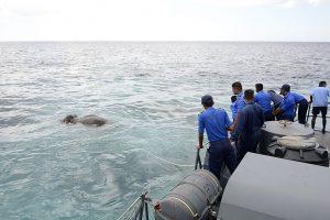 Šri Lankoje teko gelbėti į jūrą nuneštą dramblį