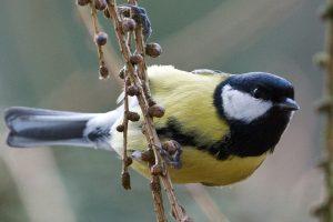 Gamtininkas: jau galime laukti pirmosios zylės giesmės ir žvalgytis žibučių