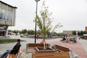 Debreceno aikštėje – medelių eksperimentas