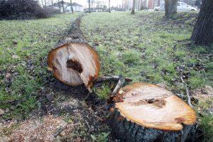 Draugystės parke retinami medžiai
