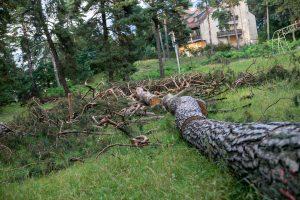 Kleboniškio afera: iškerta medžius ir laukia, kas bus?