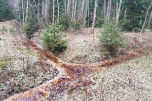 Nerimą pasėjo smarvė miške