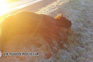Panevėžio rajone mirtinai sužaloti į kelią išbėgę stumbrai