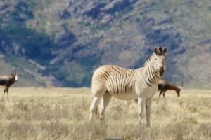 Mokslininkai sugrąžino XIX amžiuje išnykusius gyvūnus