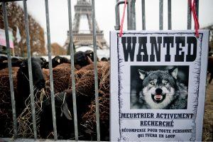 Eifelio bokšto papėdėje – ūkininkų ir avių protestas