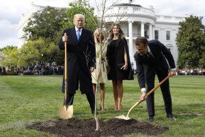 D. Trumpo ir E. Macrono pasodintas ąžuoliukas mįslingai dingo