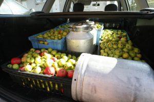 Dėl grubių pažeidimų sustabdyta sulčių spaudyklos Dituvos soduose veikla