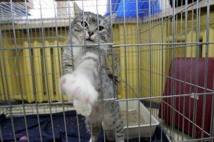 Klaipėdos senjorai namuose laikomas kates galės kastruoti pigiau