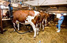 Pasaulinės pieno rinkos augimas lėtėja – perspektyvos miglotos