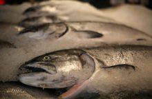 Norvegiškos lašišos kaina pasiekė rekordinį lygį
