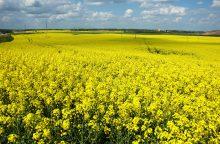 Neįprastas pavasaris ūkininkų neįbaugino