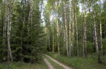 Į vieną įmonę jungiamų miškų urėdijų centras – Panevėžys