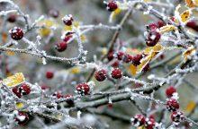 Orai: spūstels stipresnis šaltis