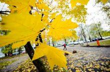 Gamtininkas: dabar lapoti medžiai kelia ne pasigėrėjimą, o susirūpinimą