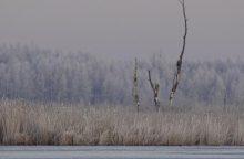 Trumpa žiema verčia gamtos specialistus suktis