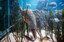 Moliuskus sparčiai naikina paslaptingas parazitas