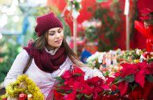 Namuose sužimbanti kalėdinė žvaigždė: ką naudinga apie ją žinoti