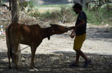 Karvės ir senjorai galės apsigyventi kartu