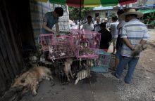 Tarptautinės žvaigždės ragina Indoneziją uždrausti prekybą šuniena