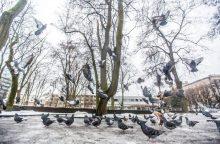 S. Paltanavičius: tikros žiemos galime nesulaukti iki pat Kalėdų