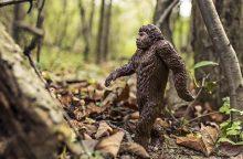 Žmonės nuo žmogbeždžionių atsiskyrė Europoje, o ne Afrikoje?