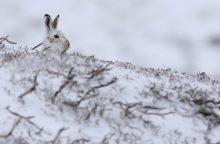 Gamtininkas S. Paltanavičius: galbūt tepamatysime nedrąsius žiemos bandymus