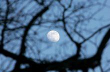 """Tarp gražiausių įmonių pavadinimų – """"Apkabink mėnulį"""", """"Ližė smaližė"""""""