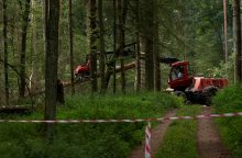 Lenkija laikosi ES teismo draudimo vykdyti kirtimus Beloveže