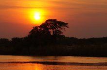 Mokslininkai: žmonių DNR byloja apie vienintelį išėjimą iš Afrikos
