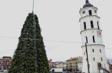 Katedros aikštėje jau kyla Kalėdų eglė