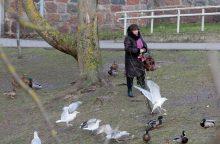 Klaipėdoje šaudyta į paukščius, vienas sužeistas