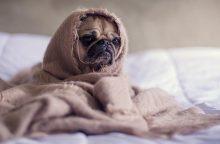 Būdas įveikti nemigą – sunki antklodė