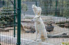 Zoologijos sodo sezono atidarymas – nauji namai vilkams ir burbulų fiesta