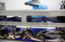 Žuvų aukciono valstybei nebereikia
