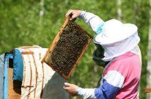 Medų atpigintų gera vasara